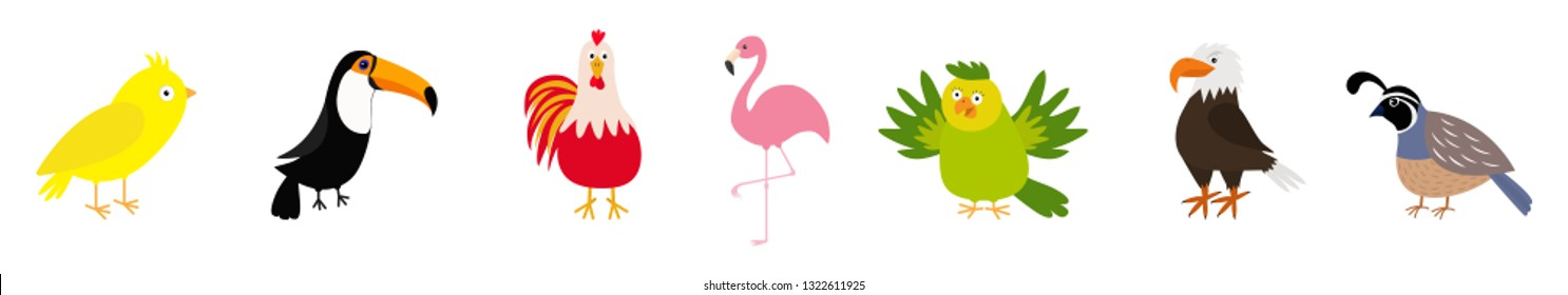 Bird set line. Canary, toucan, cock rooster, parrot, flamingo, eagle, quail. Cute cartoon characters icon. Baby animal zoo collection Isolated White background Flat design Vector illustration
