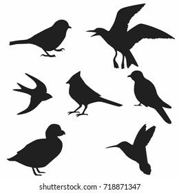 Bird Silhouette, Vector Collection of Bird Silhouettes