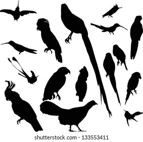 bird silhouettes collection isolated on white background