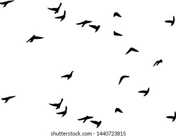Bird silhouettes. Isolated. Vector image