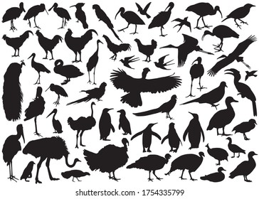 Bird silhouettes vector collection isolated on white background.