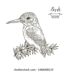 Kingfisher Illustration Images, Stock Photos & Vectors