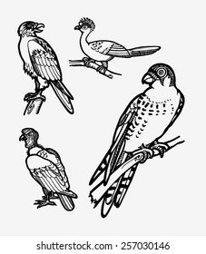Bird sketches vector set 1. Good use for sticker design, symbol, icon, illustration, or any design you want. Easy to use, edit, or change color. Each object is a group.