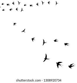 bird in the sky,vector illustration