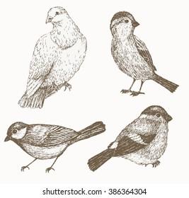 Bird: sparrow, titmouse, bullfinch, dove set. Hand drawn. Sketch . Vector  illustration. Vintage  collection.