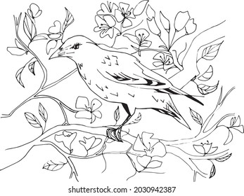 Bird in the spring blossom black and white vector coloring page