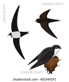 Bird Swift Set Cartoon Vector Illustration
