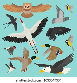 Bird vector cartoon flying birdie owl dove and duck with feather wings illustration set bullfinch stork or swallow for birdfancier isolated on background