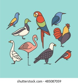 Bird, vector outline illustration, icon set: macaw, bullfinch, parrot, rooster, duck, flamingo, goose, kingfisher, eagle