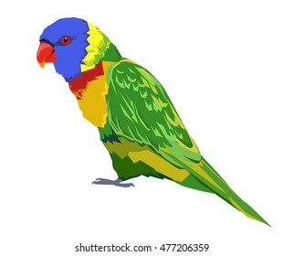 bird vector, parrot vector, rainbow lorikeet