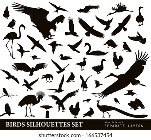 Bird vectors. Silhouettes collection