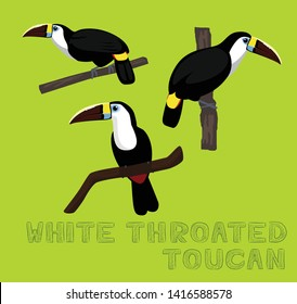 Bird White Throated Toucan Cartoon Vector Illustration