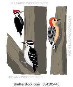 Bird Woodpecker Set Cartoon Vector Illustration
