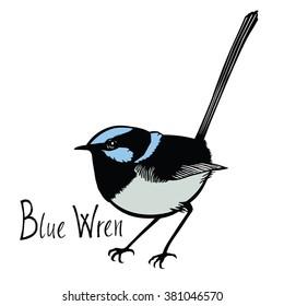 Birds collection Blue Wren Color vector
