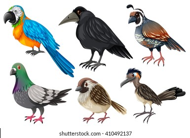 Birds collection on white illustration