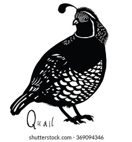 Birds collection Quail Black and white colors