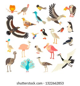 Birds collection vector set. Cartoon bird characters collection. Bird of the world. Isolated on white background