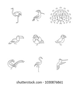 Birds are different species. Linear icons set. Can be used for logo, print, web site
