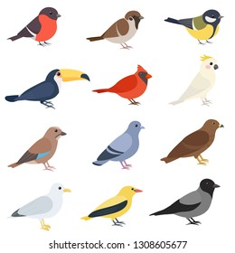 Birds of different types set. Cute cartoon bird on the side. Sparrow, bullfinch, toucan, cardinal, golden oriole, jay, rock dove, tit, hawk, gull, cockatoo, crow. Isolated vector illustration