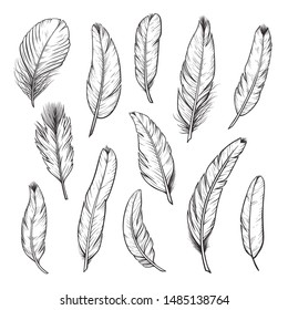Birds feathers hand drawn illustrations set. Minimalist black ink plumage sketches. Ornithology species monochrome plumelets collection. Plumes and quills isolated on white background