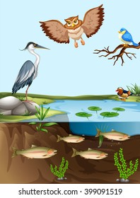 Birds and fish by the pond illustration
