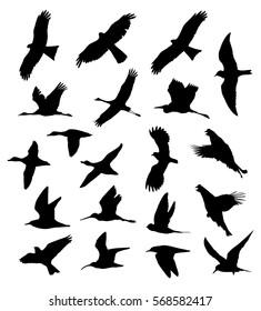 Birds in flight set silhouettes