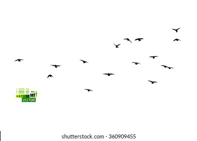 Birds flock of starlings. Vector
