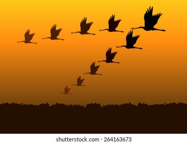 Birds flying silhouettes at sunset