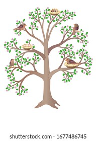Birds living on a large, flowering, spring tree - vector full color picture. Birds in nests, sit and hatch eggs, feed the chicks and sing a flock of small birds settled in the branches of a tree.