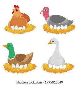 Birds in nest with eggs. Nature wildlife organic, animal sitting on whole eggs, character farm chicken duck and turkey. Vector illustration