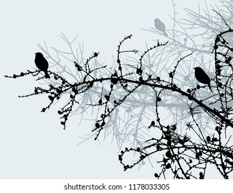 The birds on the pine branches in the winter forest