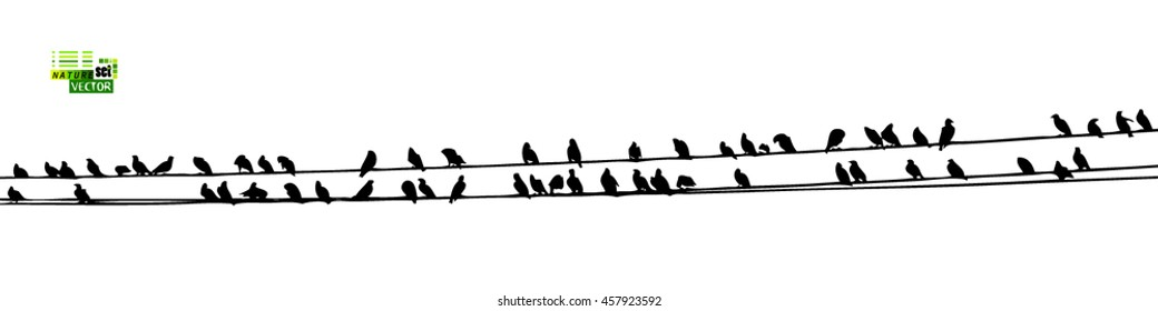1000+ Birds On Wire Stock Images, Photos & Vectors | Shutterstock