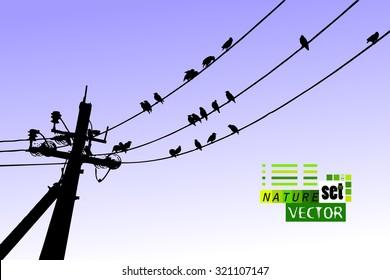 Birds on wires. Vector