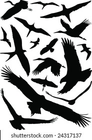 Birds with open wings silhouettes collection. Fine vector image