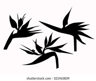 Birds of Paradise Flowers Vector
