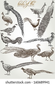 birds of the pheasant family hand drawn vector set