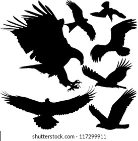 Birds of prey (eagle, hawk, falcon, griffon vulture etc.) vector silhouettes on white background. Layered. Fully editable