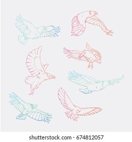 Birds of prey set. Bird engraved style emblem. Hand drawn style. Linocut, stencil vector art. Colored, minimal.