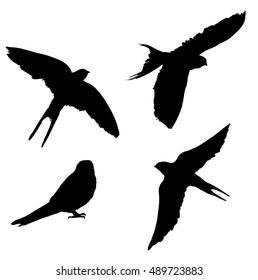 Birds Silhouette vector