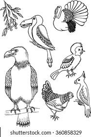 birds, sketch