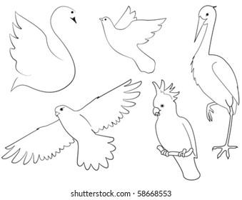 Birds. Sketch