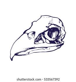 Birds skull line art hand drawn vector stock illustration