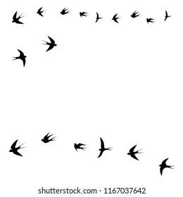 birds, swallows fly,vector illustration