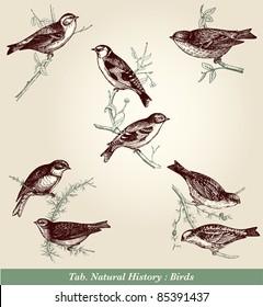 "Birds - vintage engraved illustration - ""Cent récits d'histoire naturelle"" by C.Delon published in 1889 France"