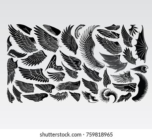 Birds Wings Vector Eagle