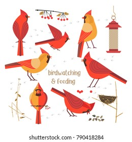 Birdwatching, bird feeding icon set. Red Northern cardinals pose comic flat cartoon. Birds straw nest, feeder, sunflower seeds. Minimalism simplicity design. Wildlife banner sign. Vector illustration