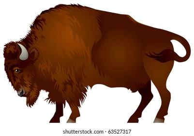 Bison. The American bison and the European wisent are the largest terrestrial animals in North America and Europe.