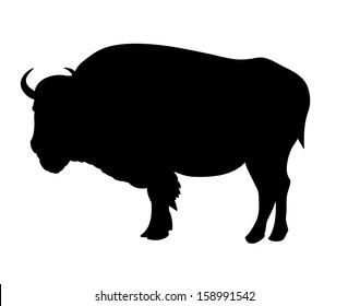 Bison Illustration of bison