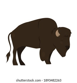 Bison isolated on white background. Vector graphics.