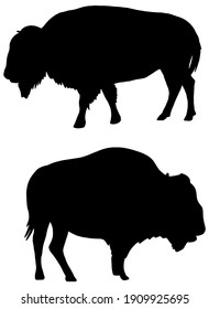 Bison Silhouette in black on white background